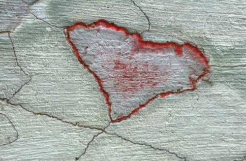 Природные картинки про любовь