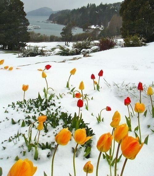 весна идет весне дорогу сочинение