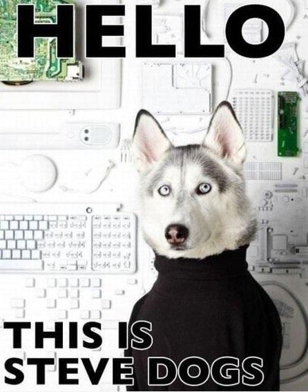 Смешные собаки мемы