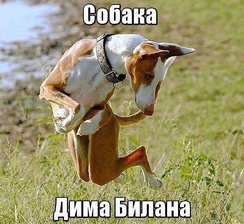 Собачка Димы Билана