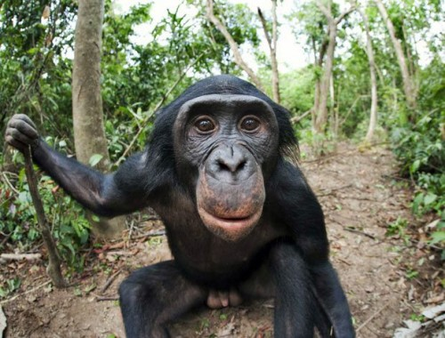 фото видео секс обезьяны и человека