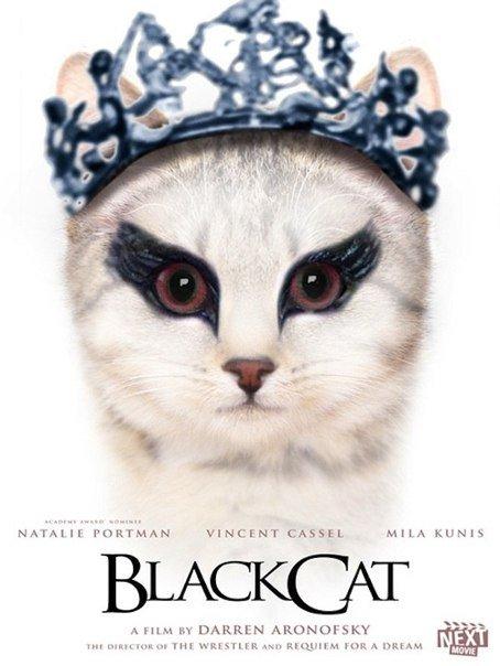 Если бы кино снимали коты