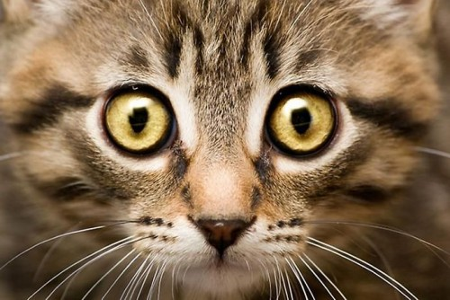 Красивые глаза котов