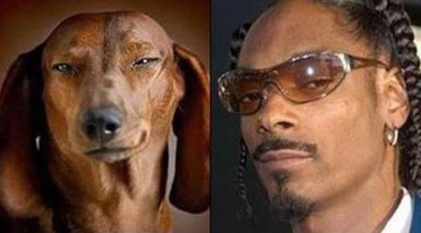 Забавное сходство Собаки похожи на людей