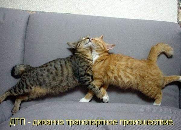 Дмитрий котов комсомольск - 071