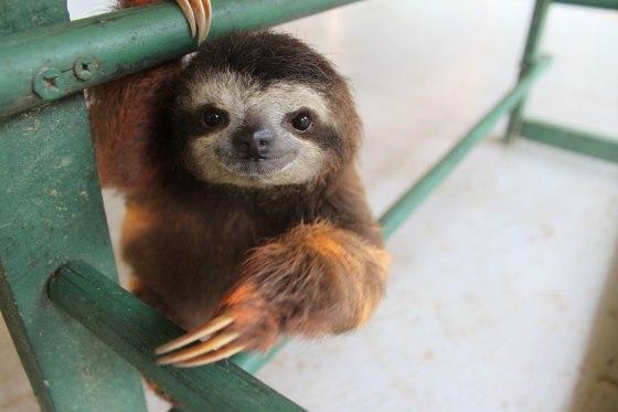 Мимимишные снимки с ленивцами