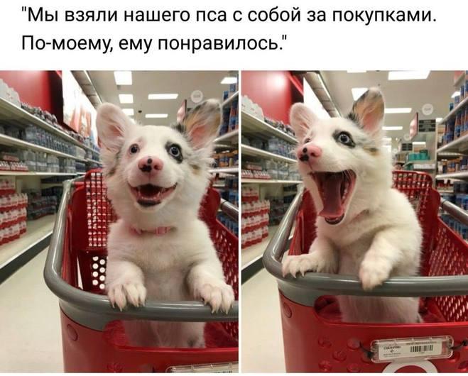 День шоппинга