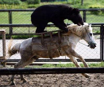 Забавные животные 2
