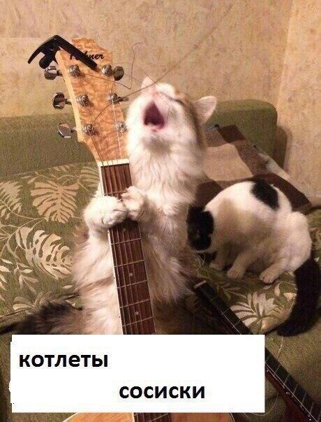Грустная песня в исполнении кота