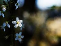 Весеннее цветение HD