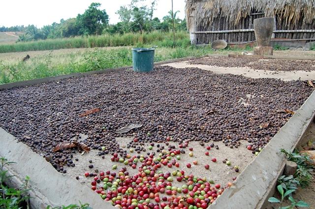 Куди поїхати істинним кавоманам: Гавана, Куба