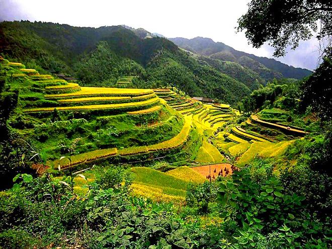 Рисові тераси в Китаї
