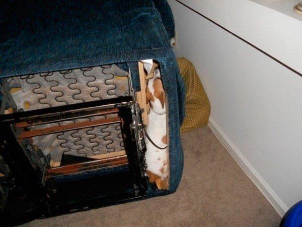 Животные, проигравшие битву с мебелью