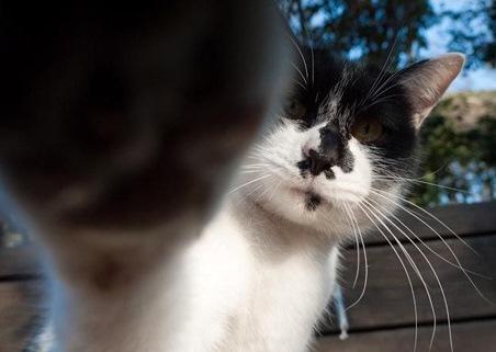 Говорите с кошками!
