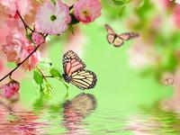Весна и бабочки
