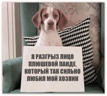 Постыдное наказание для собаки