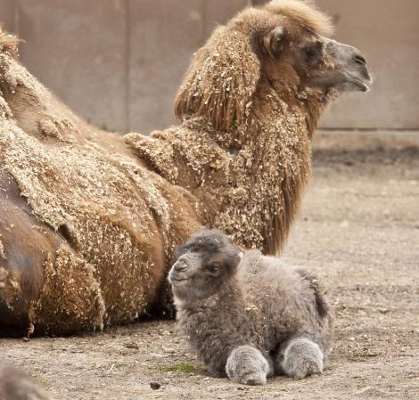Новорожденные малыши