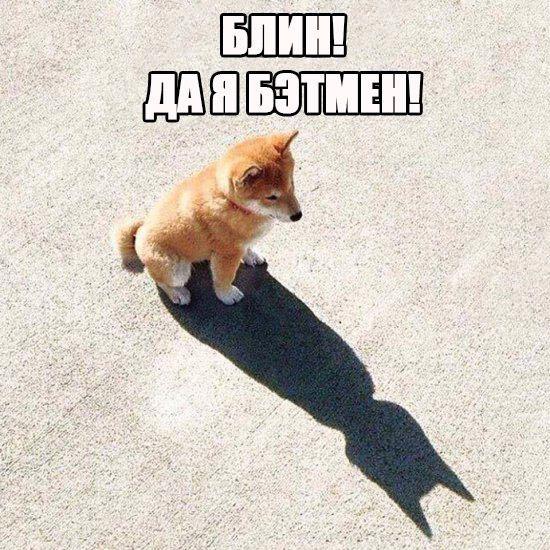 Маленький Бэтмен спешит на помощь