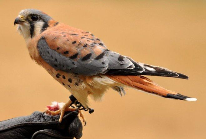 Самые красивые и необычные птицы планеты