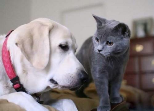 Кіт-Пес)))))
