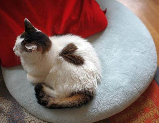 Котики, помеченные сердцем