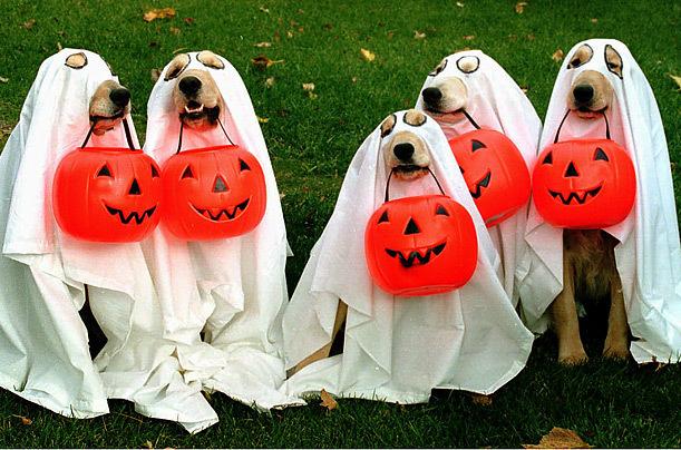 Смешная открытка с Хэллоуином