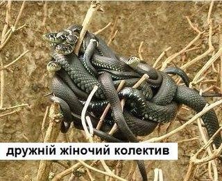 приколы про змейка