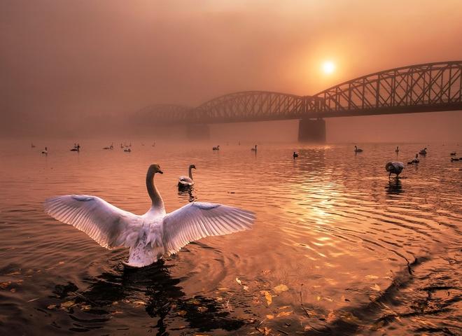 лучшие фото природы