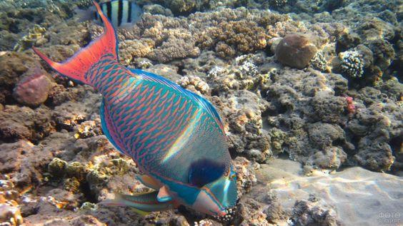 Cамые красивые рыбы