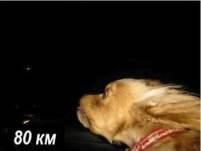 Собака которая любит скорость