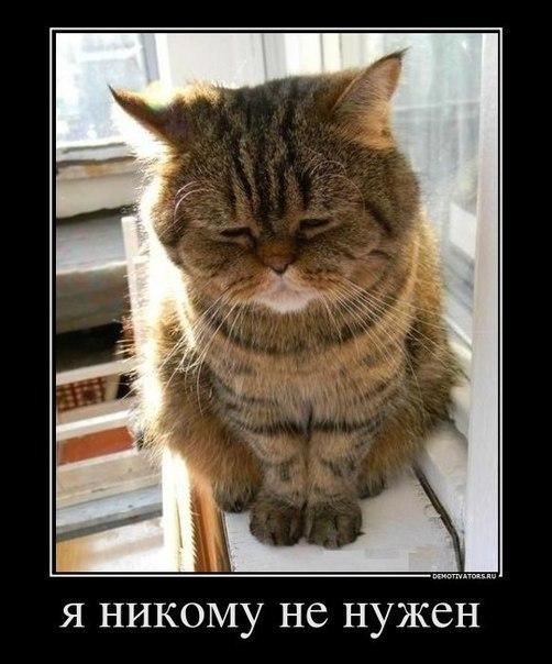Демотиватор про грустного котика