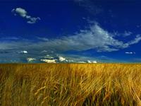 Украинское поле