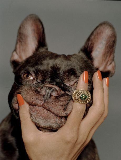 Руки і собаки: 12 фотографій з улюбленцями, які ти захочеш повторити