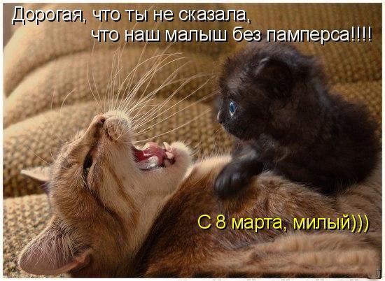 Милые котоматрицы к 8 марта