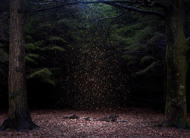 Фантасмагоричний ліс в Англії