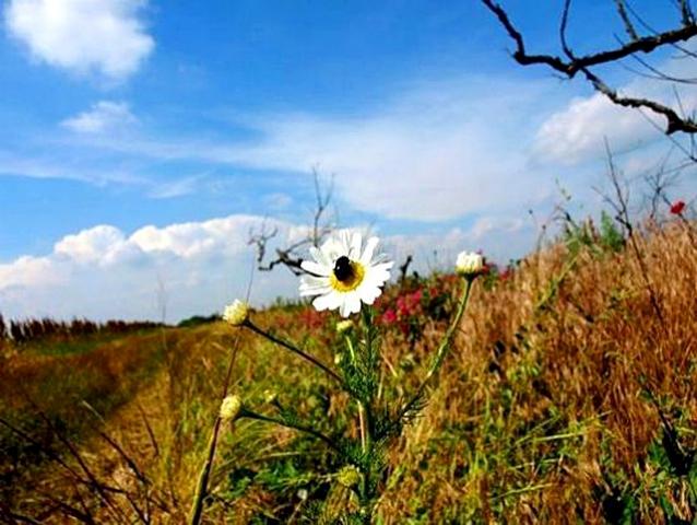 Куда поехать отдыхать в ноябре: Аскания-Нова