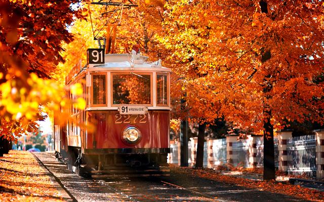 Осень и трамвай