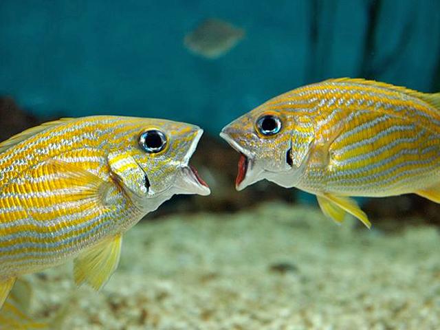 Топ-5 веб-камер в кращих акваріумах світу