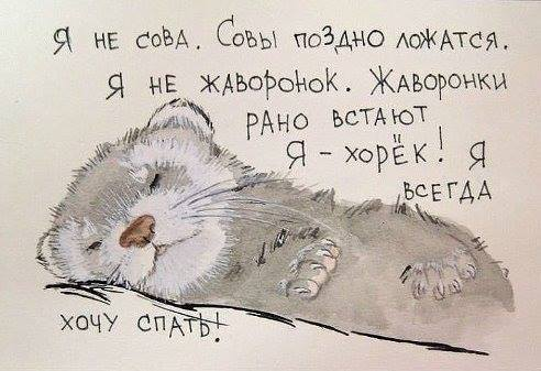 Я - хорёк! Я всегда хочу спать