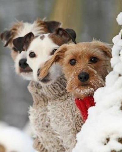 Стильные собачки зимой