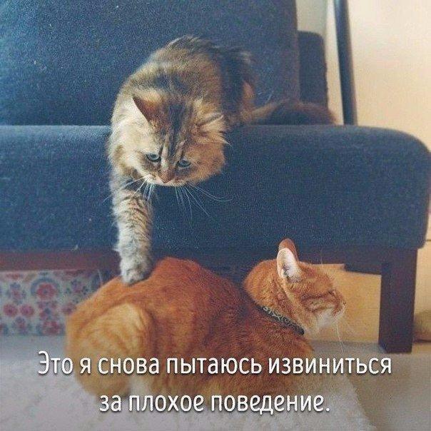 Животные, которые похожи на людей