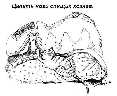 Обязанности кота в картинках