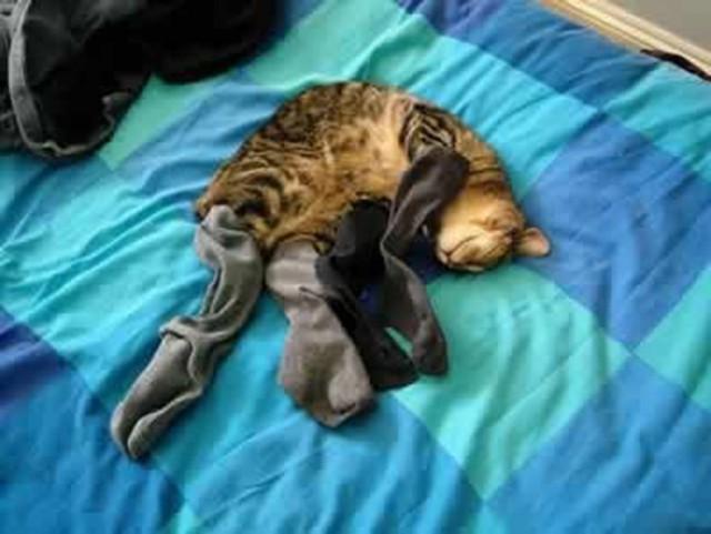 Похолодало... котики в носочках