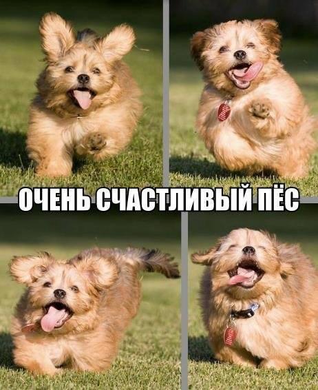 Самый счастливый пёсик