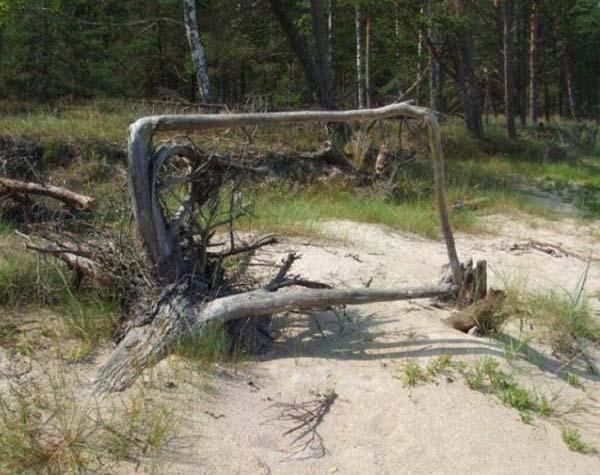 Квадратный корень. Так вот он какой на самом деле.