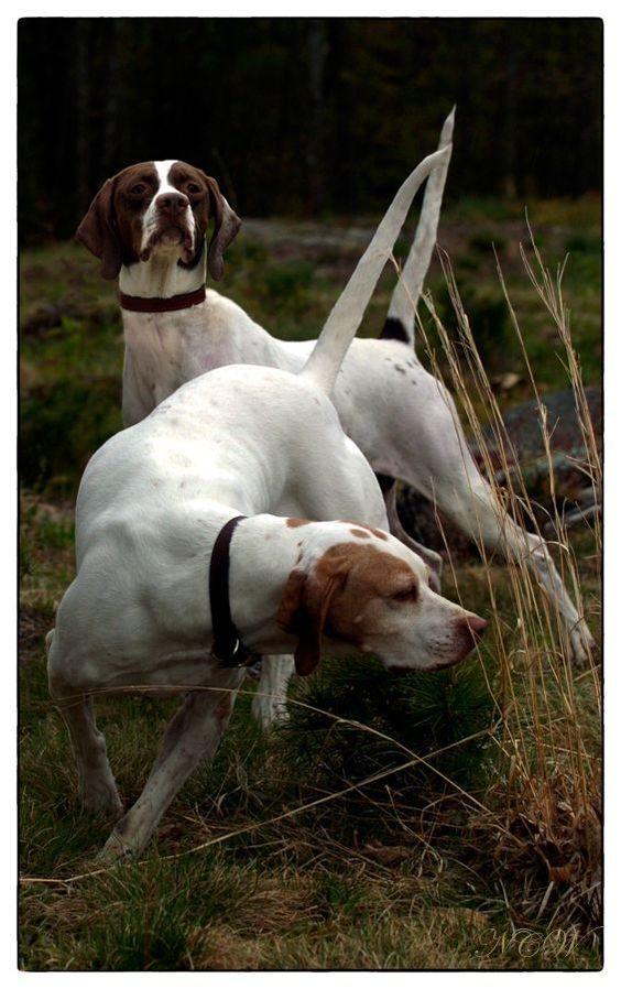 День собаки: ТОП-10 найкрасивіших порід