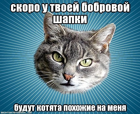 Классический котэ
