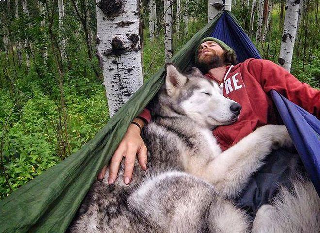 Собака-волк Локи