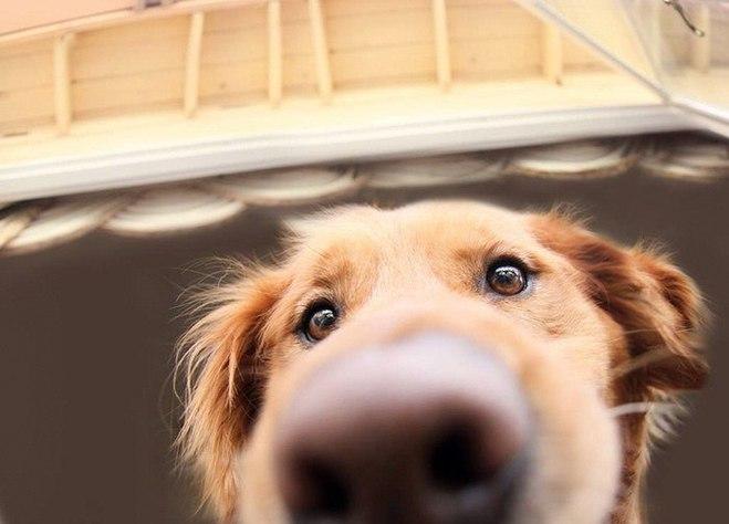 Любопытные собачки