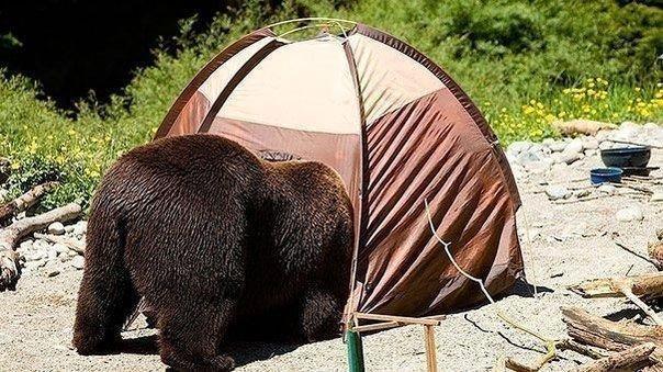 Чем заняться, если ты медведь